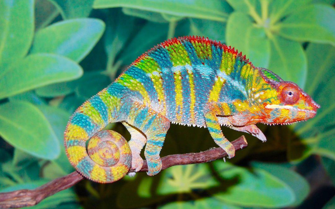 LLC Series Part 1 – The Chameleon: Legal Form vs. Tax Classification